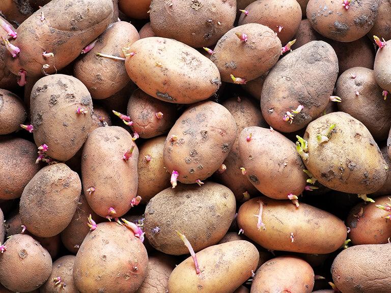 Group of potatoes