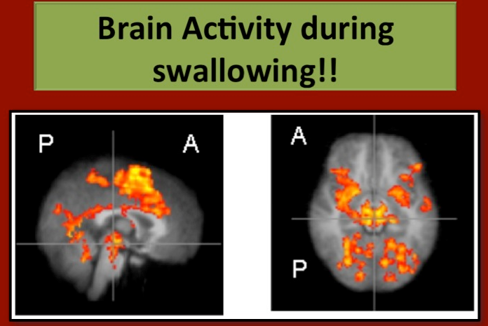 Brain Activity during swallowing