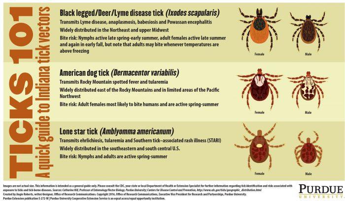 Tick infographic