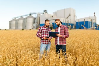 Two farmers are standing in a wheat field with tablet