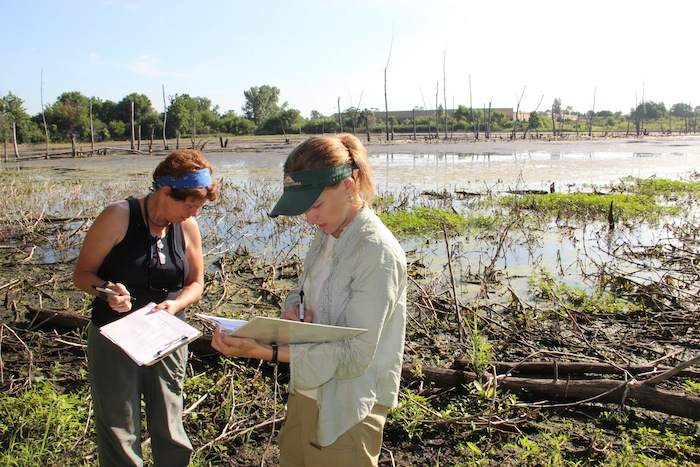 Two teachers look for a good place to dig for soil samples on the shore of the Celery Bog.
