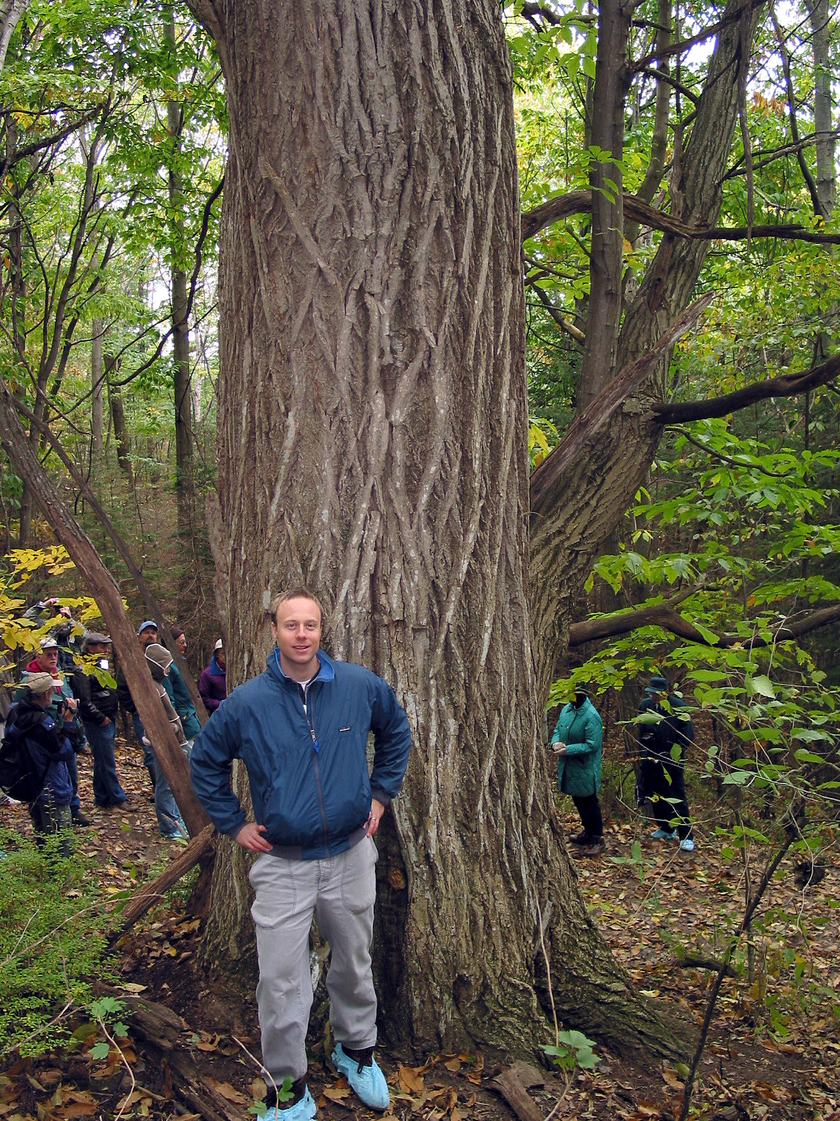 Chestnut Trees To Spread Across Landscape Again Says