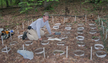 Earthworms appetites may facilitate carbon storage so the chemical isnt released into the atmosphere as CO2, which potentially could help curb climate change. Tim Filley, a Purdue University environmental chemist, checks one of the plots at the Smithsonian Environmental Research Center in Maryland, where he and Cliff Johnston, another Purdue environmental chemist, monitor how much and how fast the worms eat leaves and other materials on the forest floor. This is part of a National Science Foundation-funded collaborative study by Purdue, Johns Hopkins University and the Smithsonian Institution. (Photo courtesy of Cliff Johnston, Purdue University Department of Agronomy)