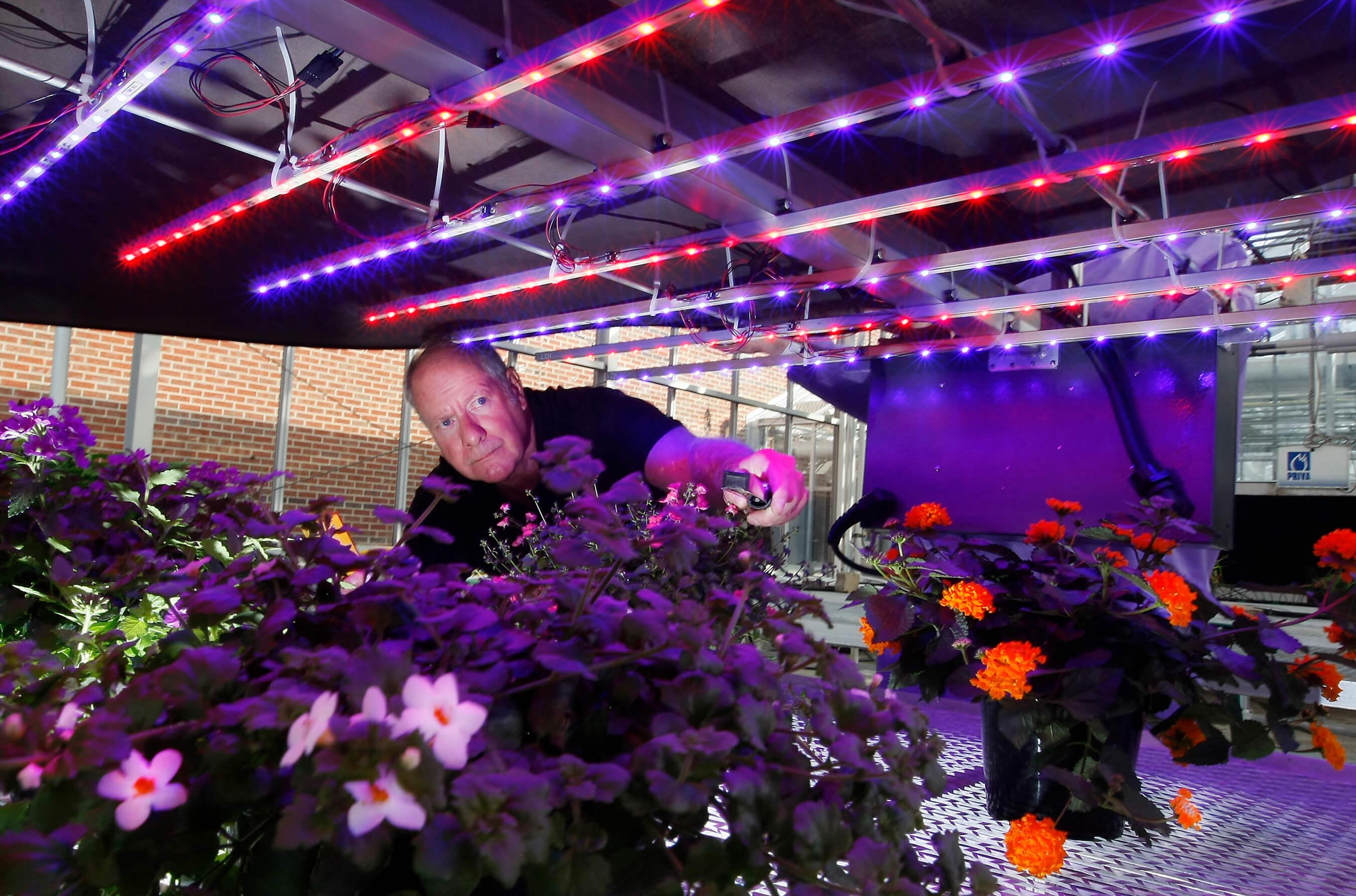 Фито светодиодная лента для растений своими руками