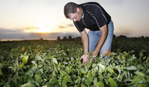 Shaun Casteel looking at soybeans