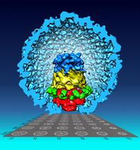 Jiang bacteriophage