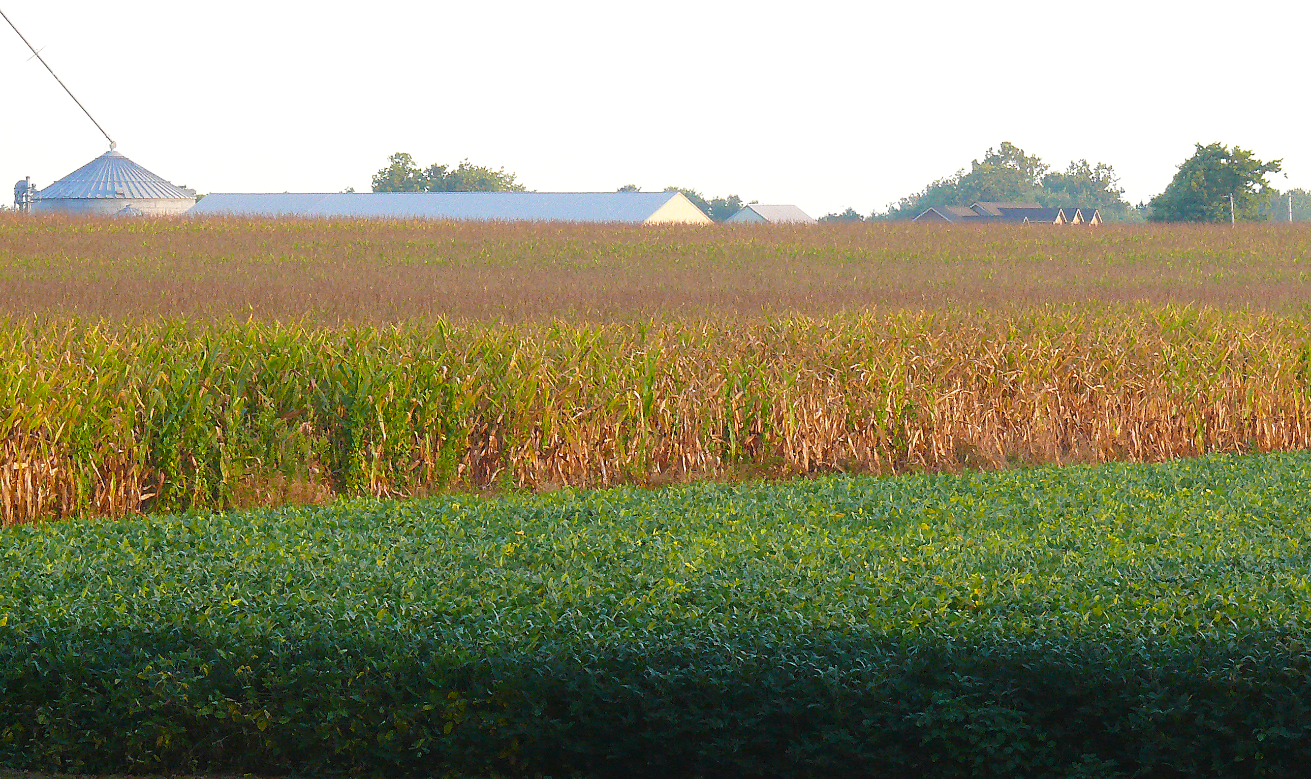 Image result for west lafayette corn fields