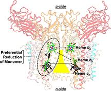 cytochrome b6f complex
