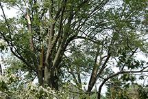 Lerner tree