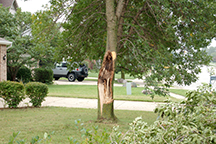 tree decay