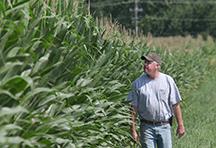 Nielson-Corn