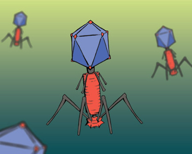 Phage invasion