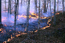 Saunders burn prescribed fire