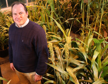 Mitch Tuinstra with sorghum plants