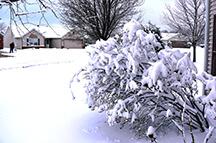 Niyogi winter