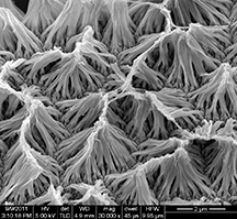 Polyprrole nanowires