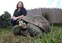 Willouhby tortoise