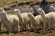 Core foundation alpaca