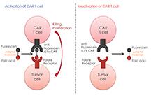 Low cart cells