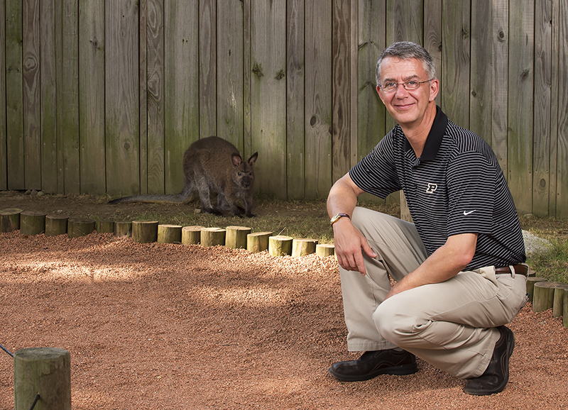 Dr. Mark Rochat, clinical professor of small animal orthopedic surgery, with the female wallaby whose dislocated hip he repaired. (Purdue University photo/Rebecca Wilcox)
