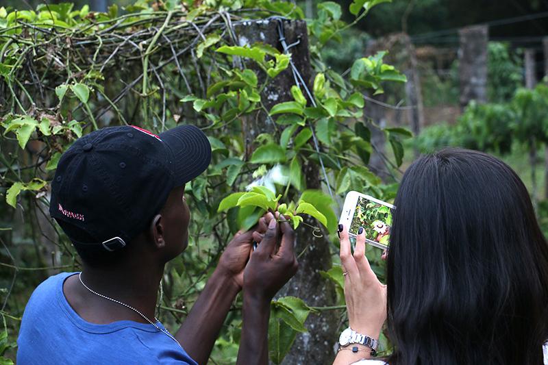 Sustainable rainforest