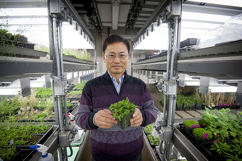 Zhu plant enviroment