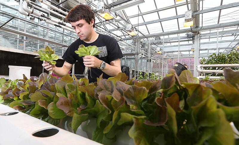 Brown hydroponics