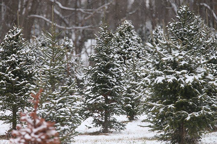 Preventing Christmas tree fires: Here's why you should water your Christmas tree