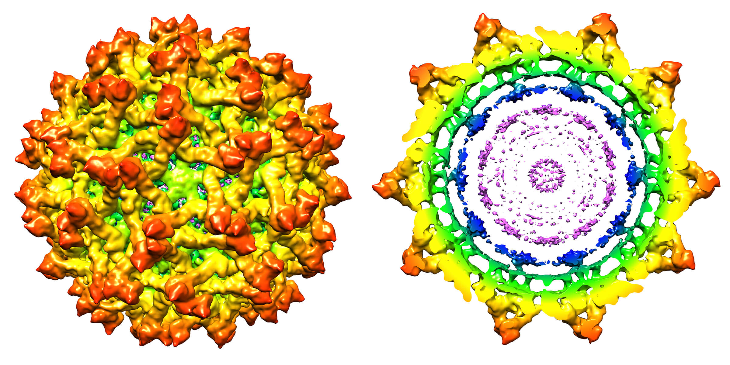 High-resolution structure of the immature Zika virus