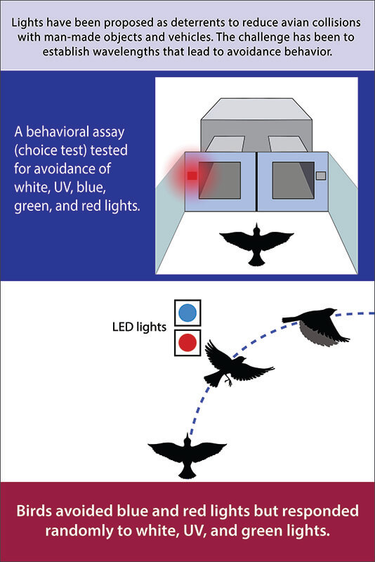 Birds infographic