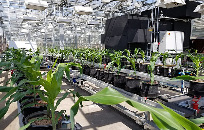 greenhouse conveyor