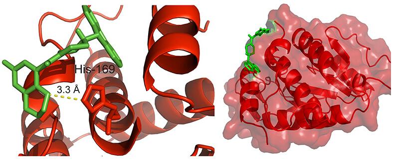 Laminin receptor
