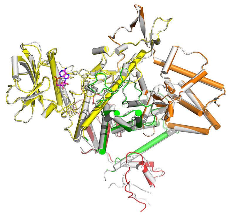 legionella protein