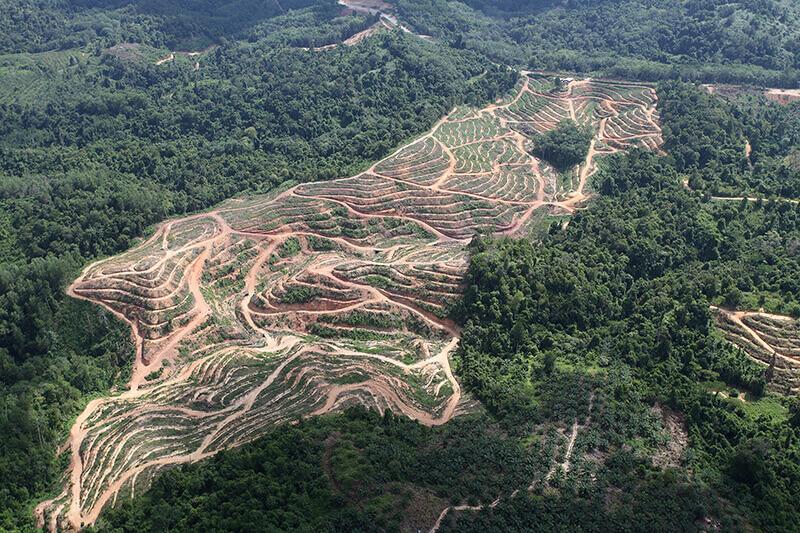 Malaysia deforestation