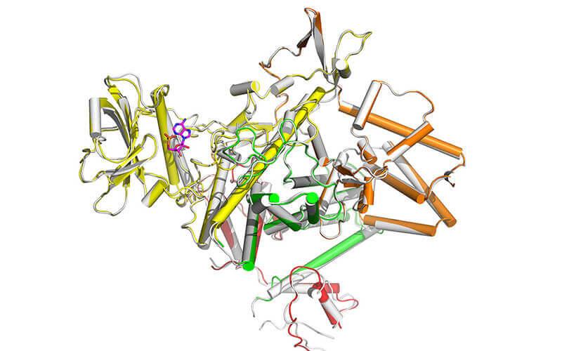 protein discovered in Legionella pneumophila