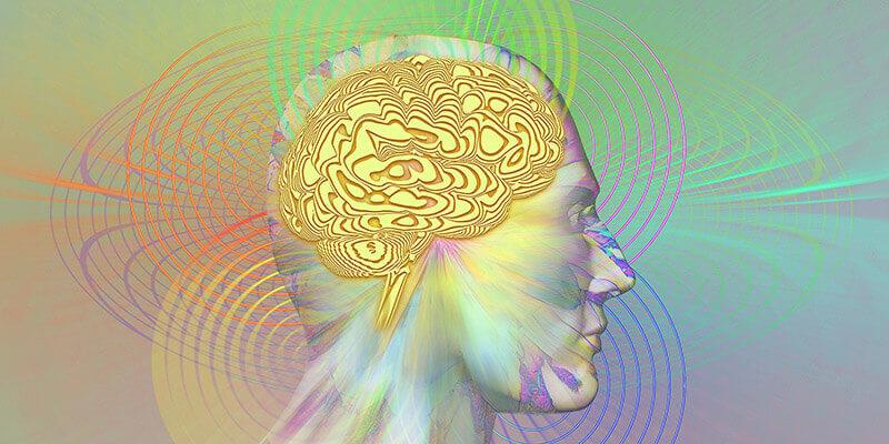 chubykin-brain