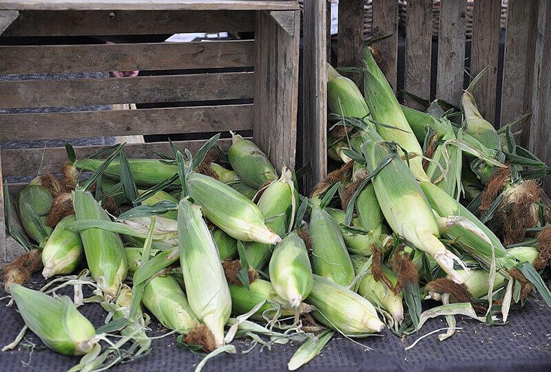 corn-market