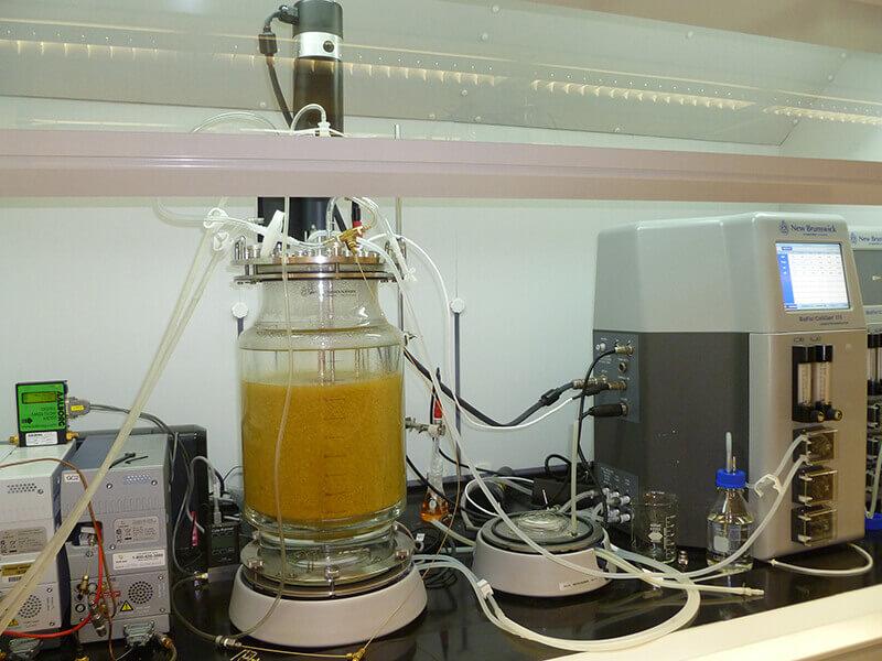 hydrogen-yeast