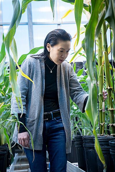 inari-greenhouse