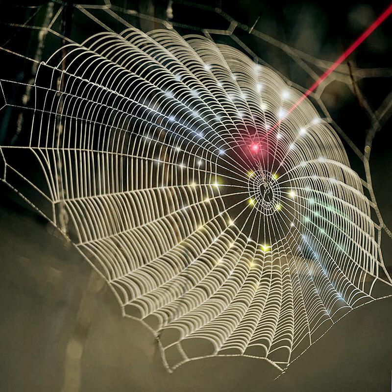 lee-webs