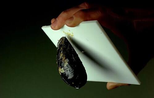 mussel-teflon