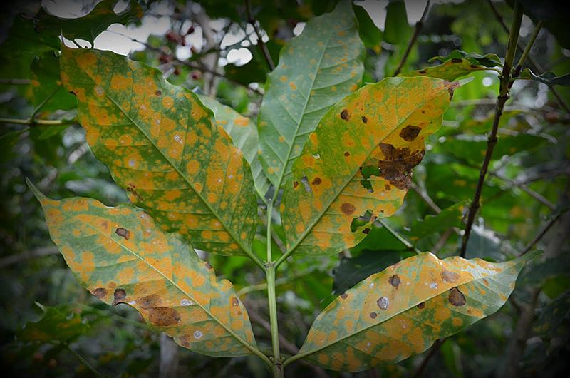 aime-leaves