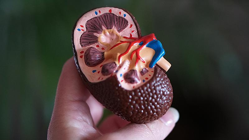 jaynes-kidney