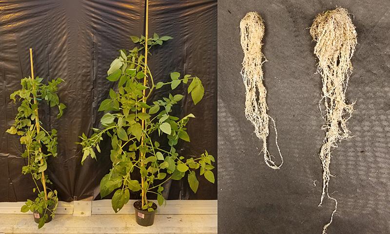 plants-microbe