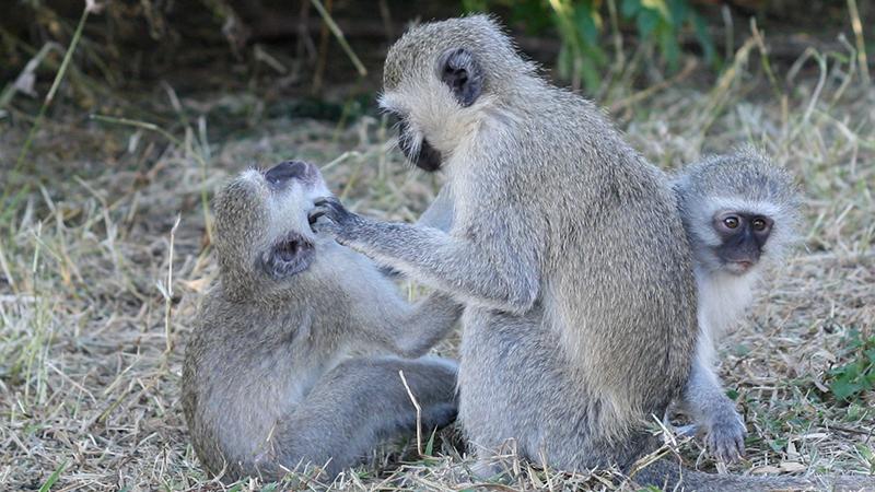 social-grooming